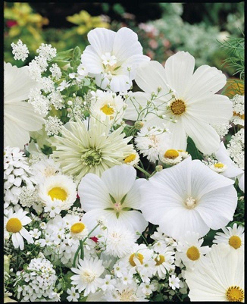 Veldbloemen Witte tinten 25 gram kopen