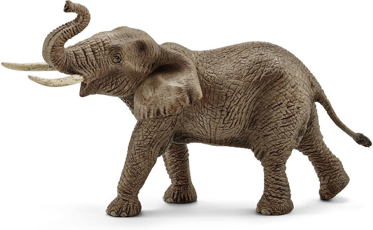 African elephant, male