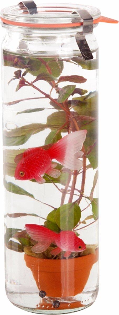 Waterworld® Glas - Waterplant + 2 Kunststof Goudvissen