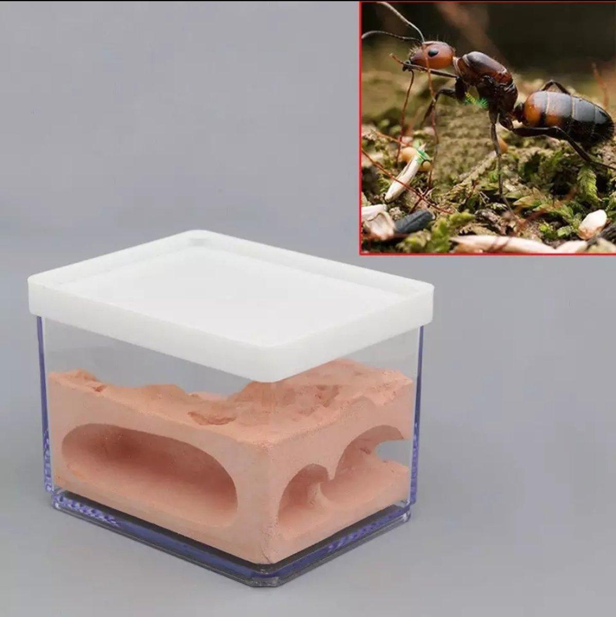 Mierenboerderij / formicarium van gips
