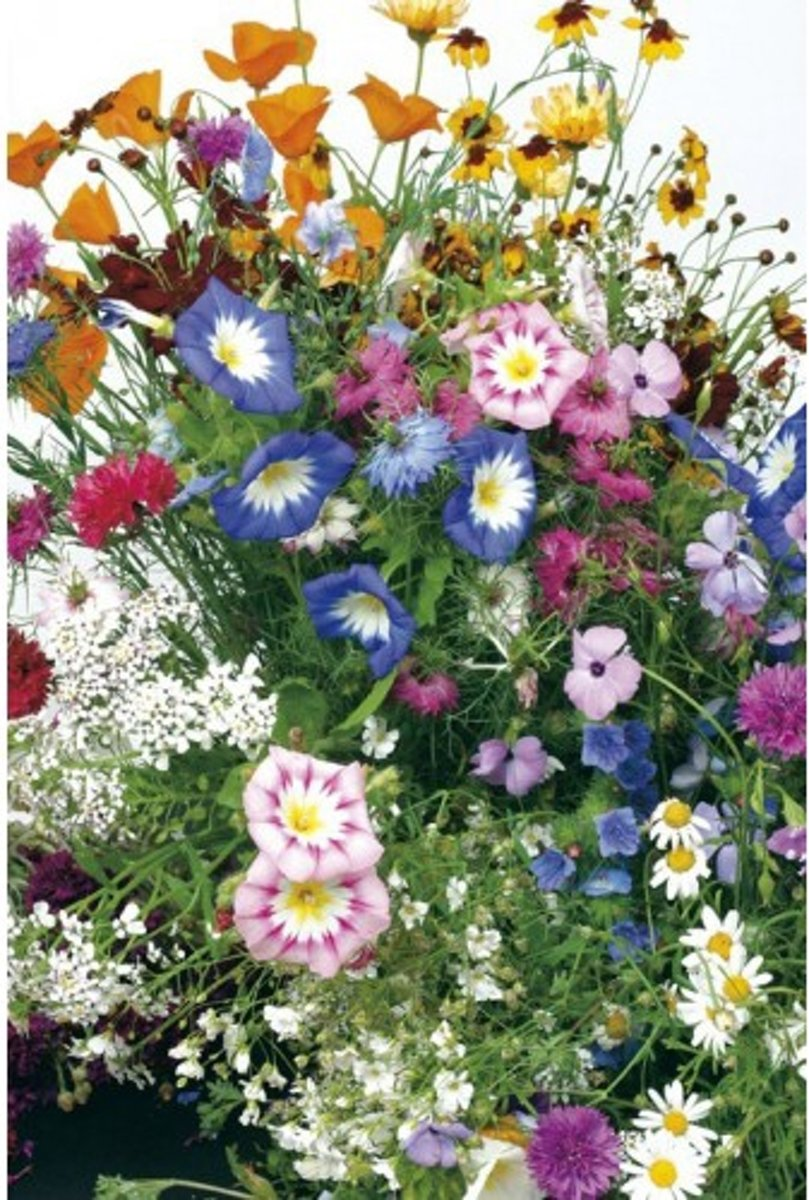 Veldbloemen mini Wildbloemen eenjarig 10 gram kopen