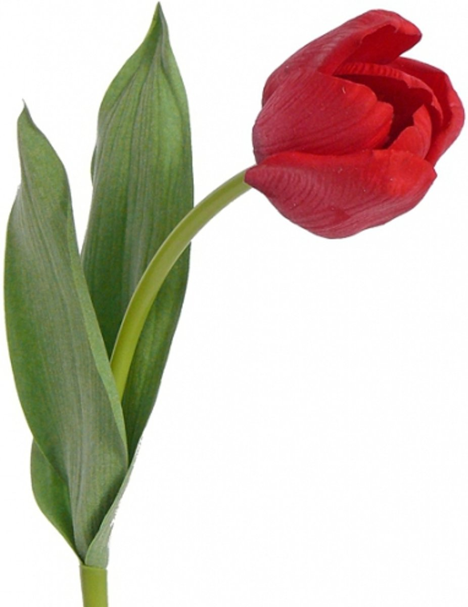 Tulp rood 48 cm kopen