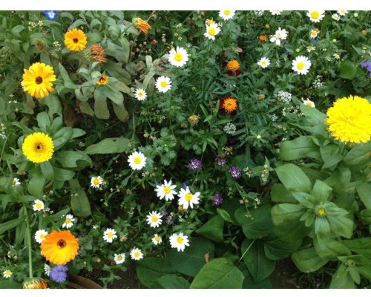 Veldbloemen Mini Wildbloemen meerjarig 100 gram kopen