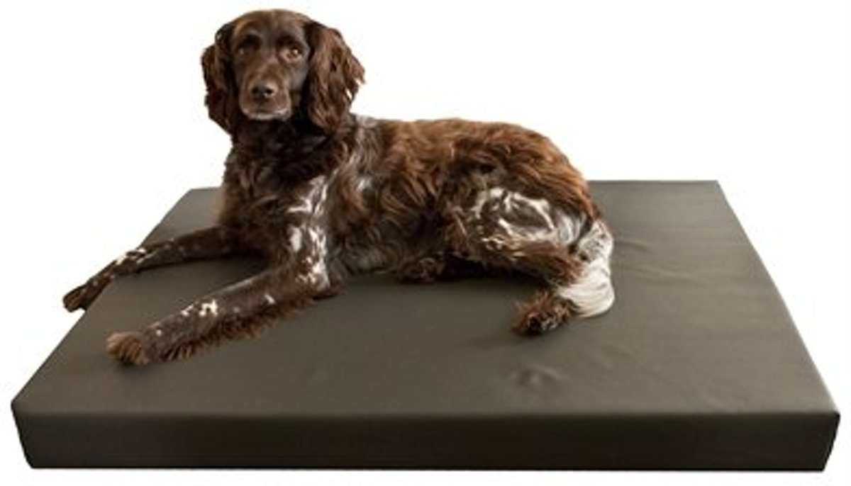 HD Dogbed - 55x80cm kopen