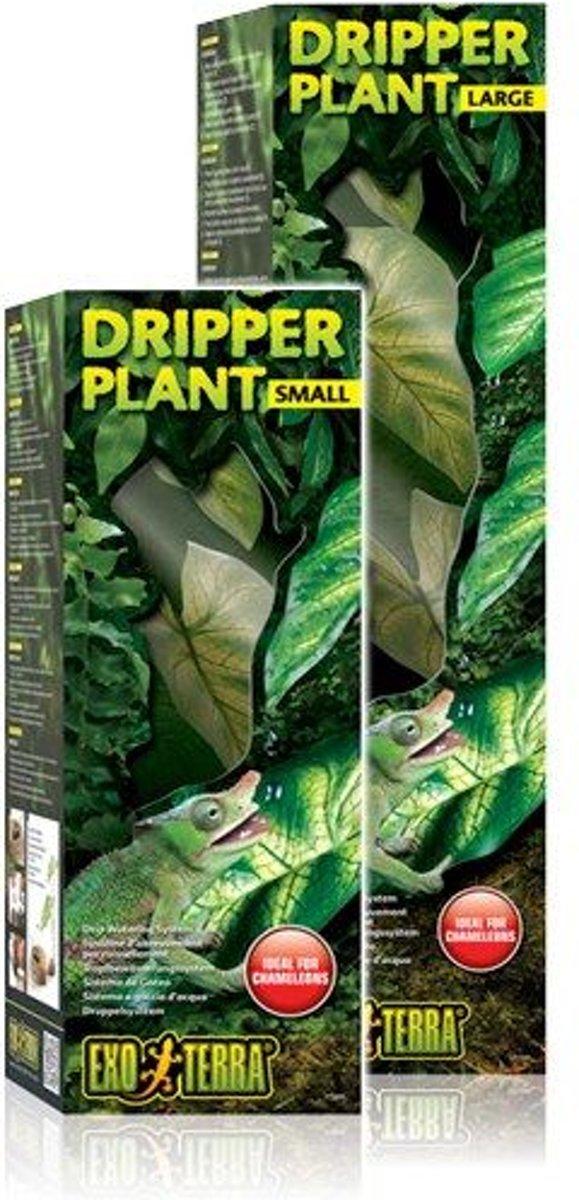 Dripper Plant Small
