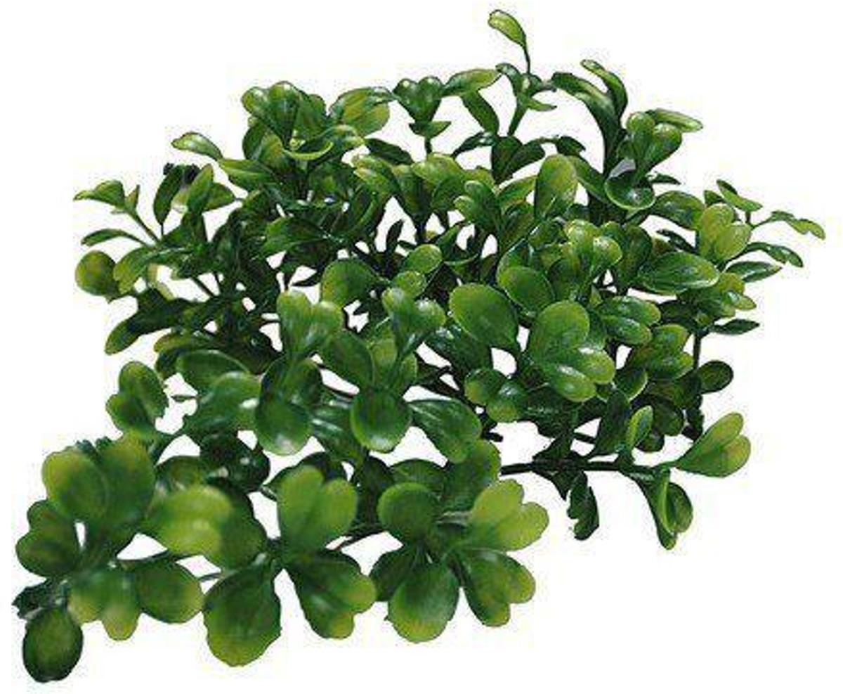 Lucky Reptile Terrariumplant TP-44 kopen