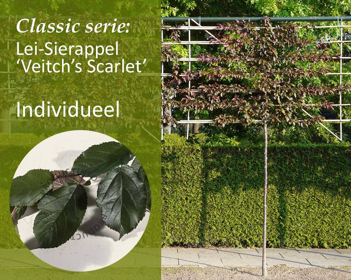 Lei-Sierappel 'Veitch's Scarlet' - Classic - individueel kopen