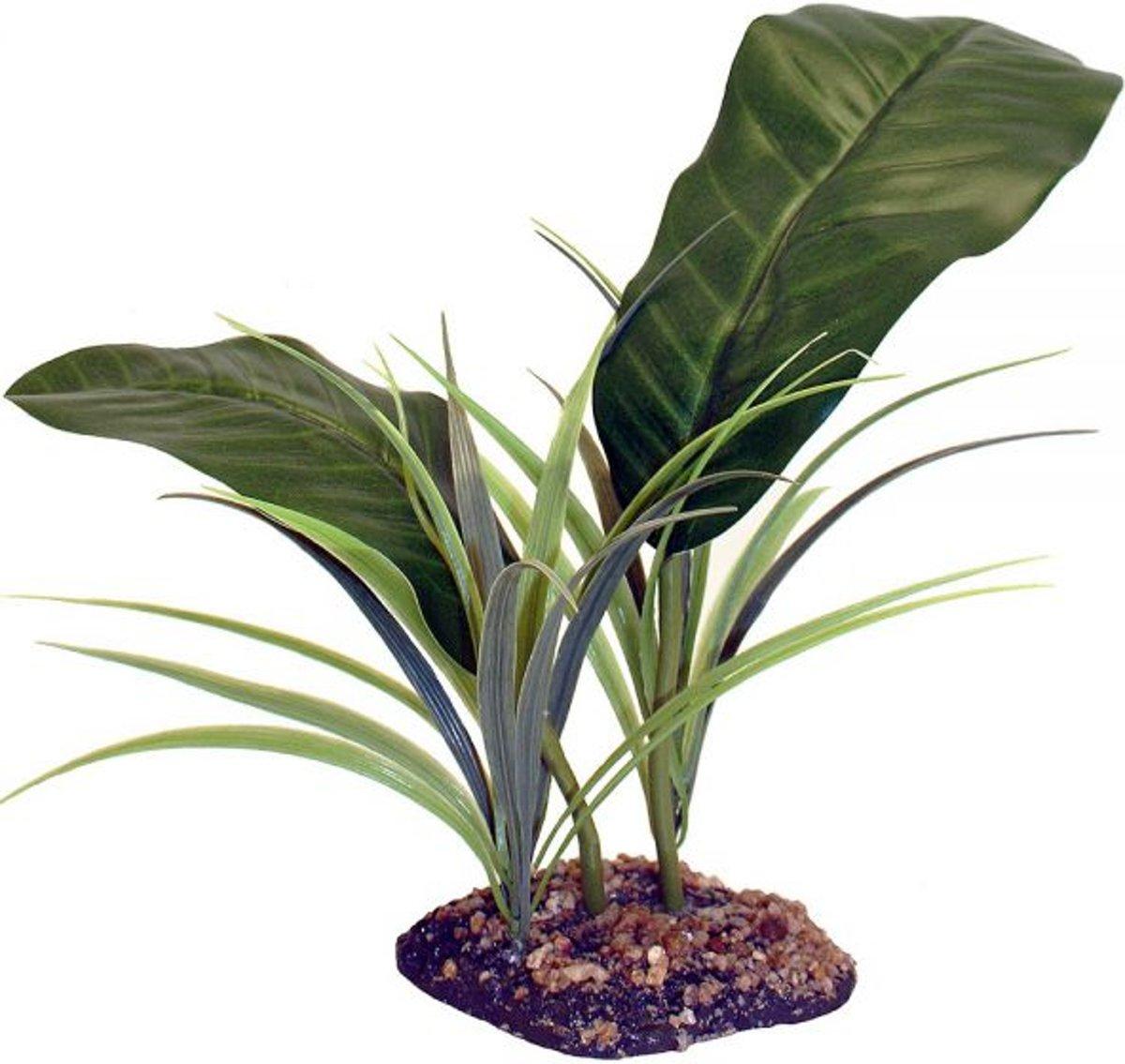 Komodo evergreen canopy 35 cm kopen