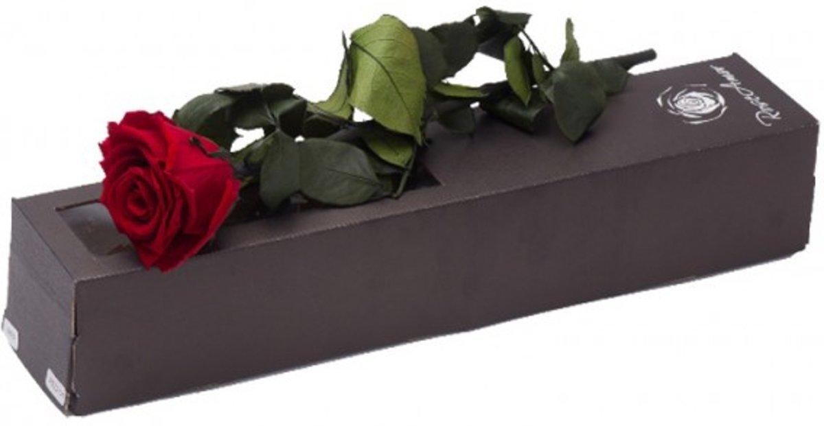 Geconserveerde licht rode roos met steel kopen