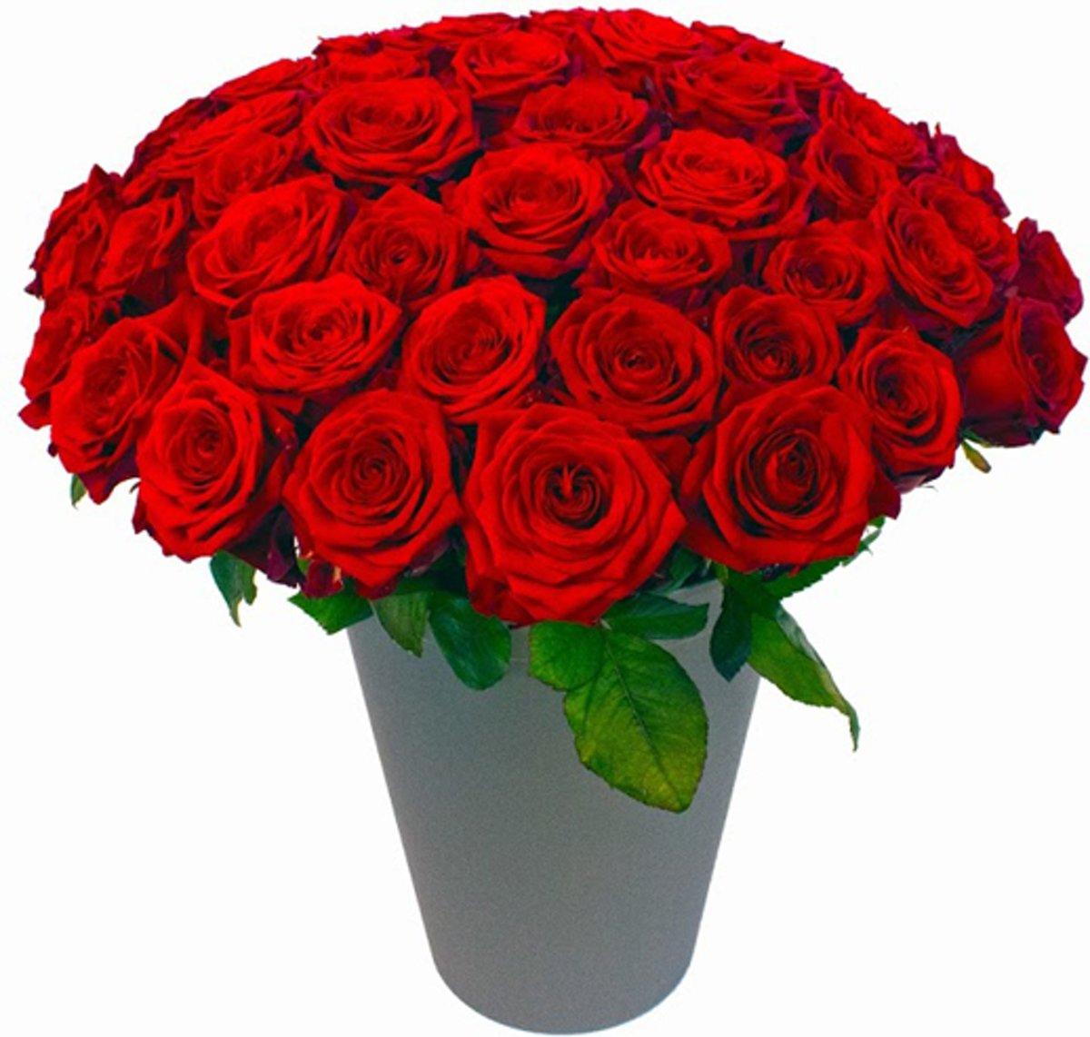 60 rode rozen in vaas kopen