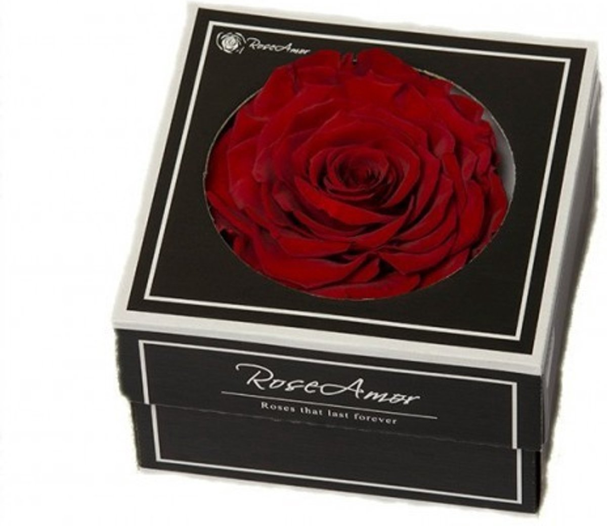 Rode rozen kop XXL geconserveerd in cadeaubox kopen