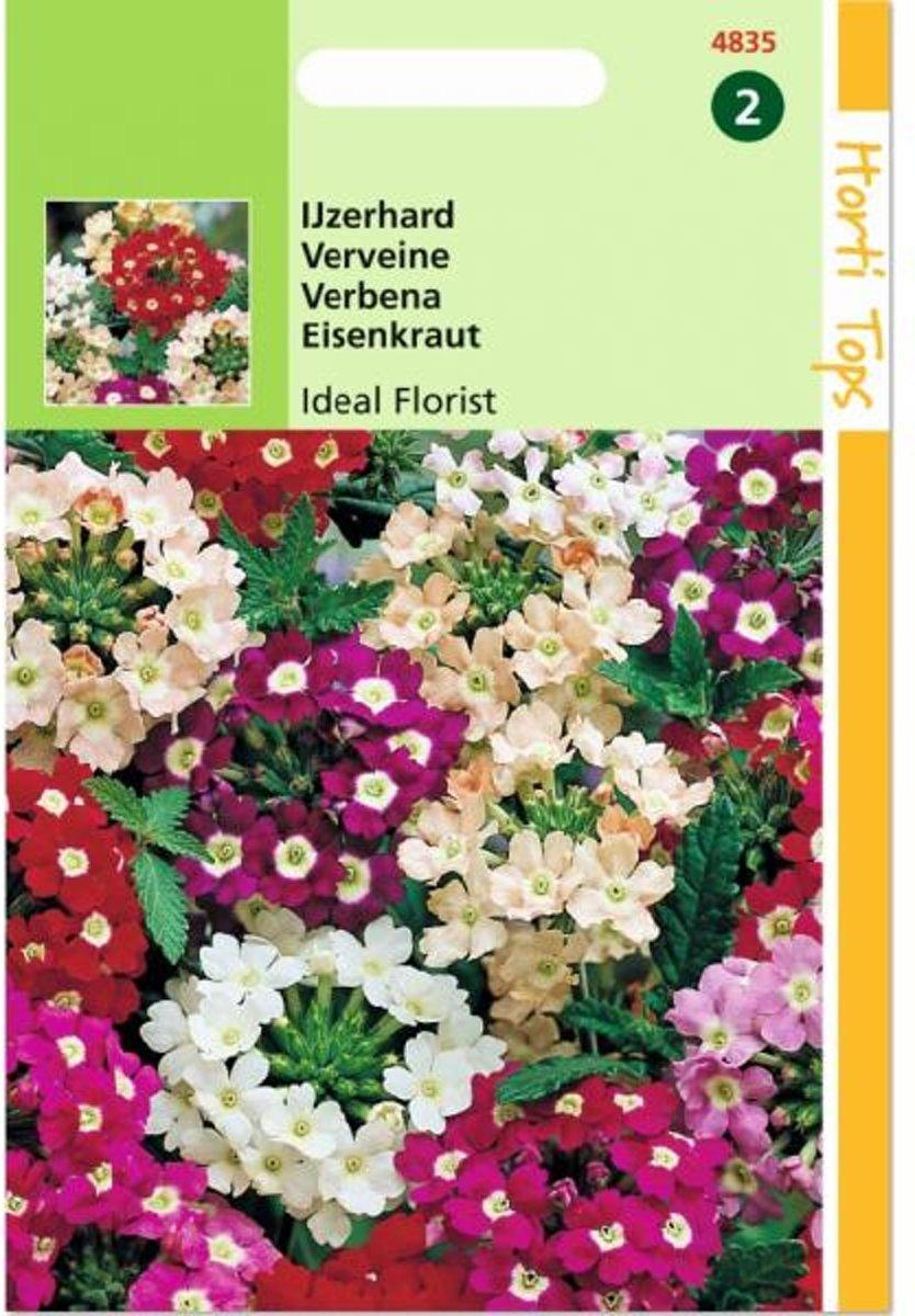 Ijzerhard Grandiflora - Verbena Hybrida - set van 7 stuks kopen