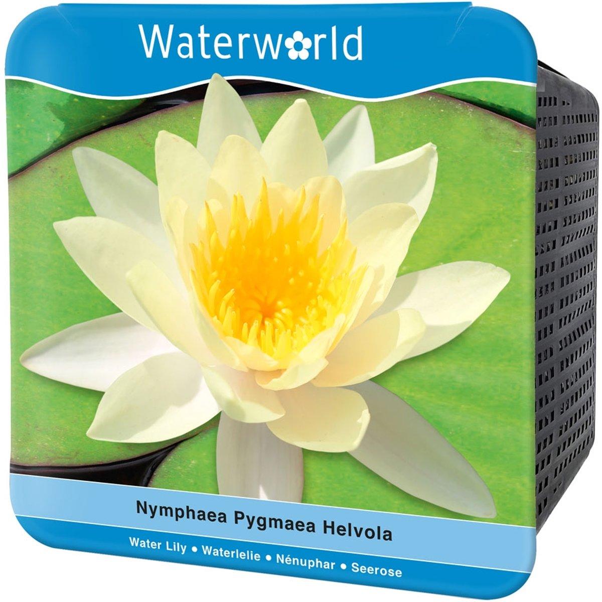 Waterworld Aqua Set Nymphaea Pygmaea Helvola - Gele Dwergwaterlelie - (Waterlelie, Vijvermandje, Klei, Grind & Voeding) kopen