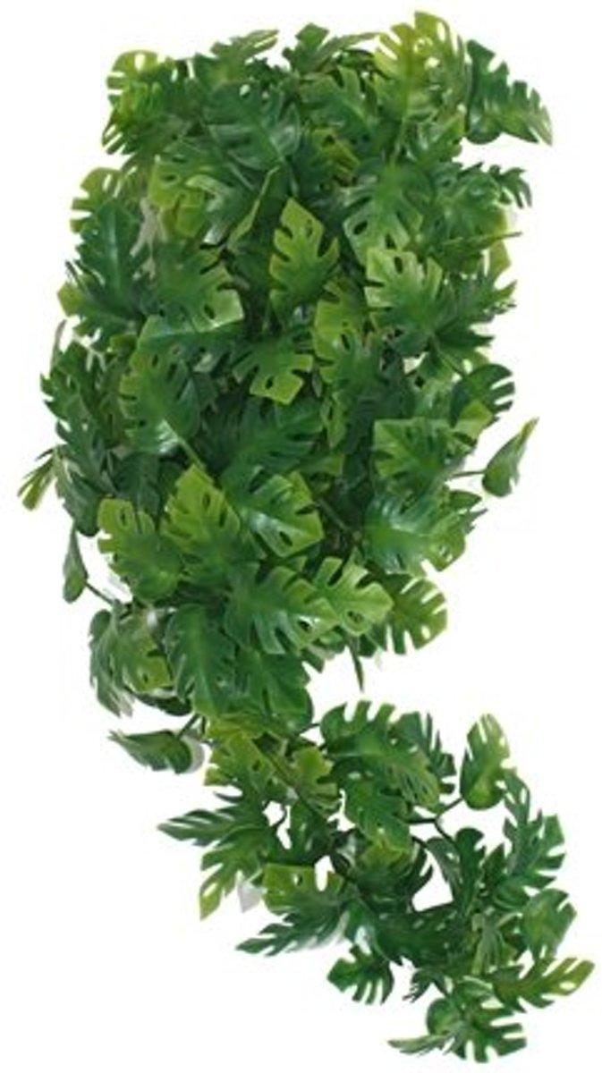 Komodo Plant Split Philodendron - 30 cm kopen