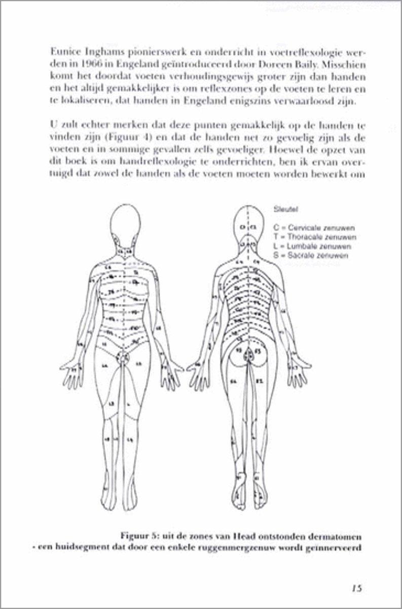 Tolle Anatomie Diagramme Für Medizinstudenten Bilder - Anatomie ...