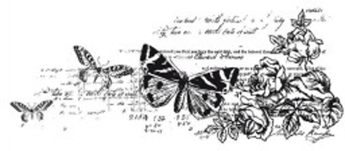 Clearstamp stempel botanisch - Kaisercraft clear stamp 5x13cm botanical - 1 stuk