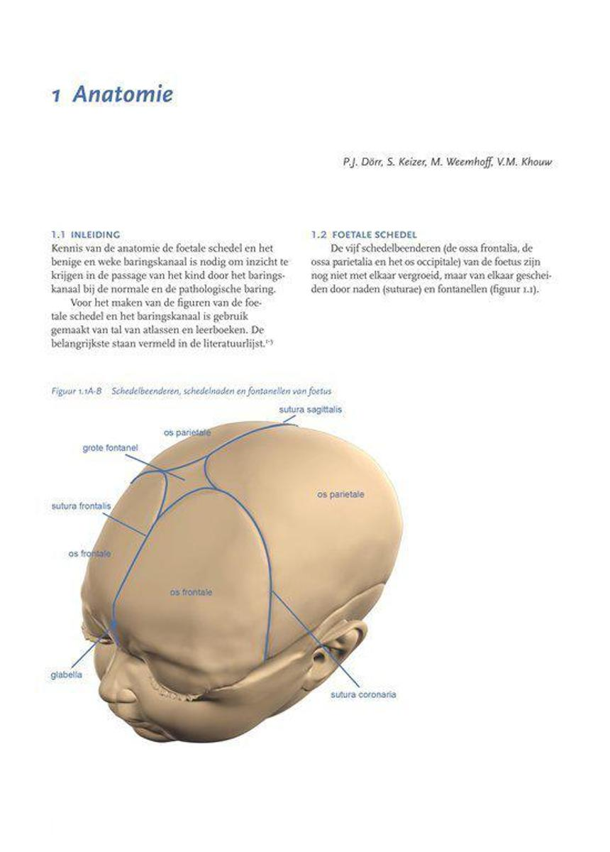 Ziemlich Anatomie Des Bum Zeitgenössisch - Anatomie Ideen - finotti.info