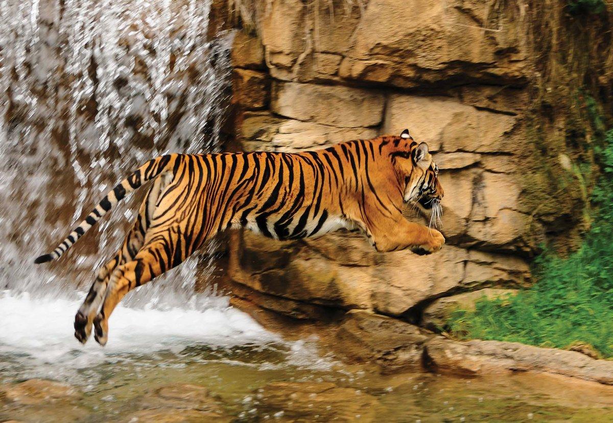 Fotobehang Tiger Waterfall Nature   M - 104cm x 70.5cm   130g/m2 Vlies kopen