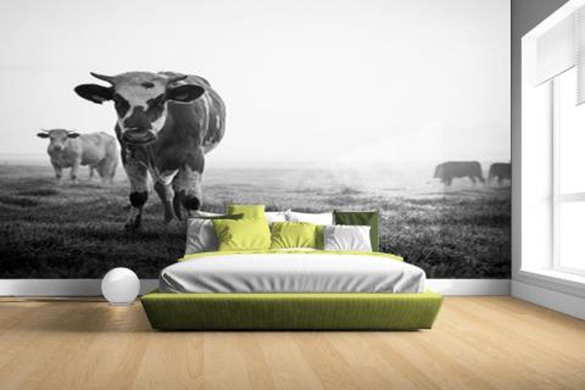 Zwart-wit koeien Fotobehang 380x265 kopen