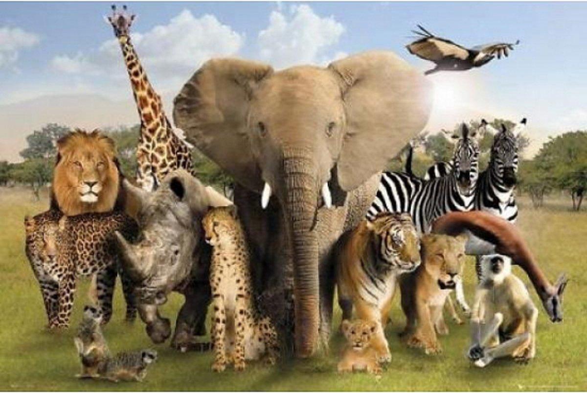 Poster wilde dieren 61 x 91,5 cm kopen