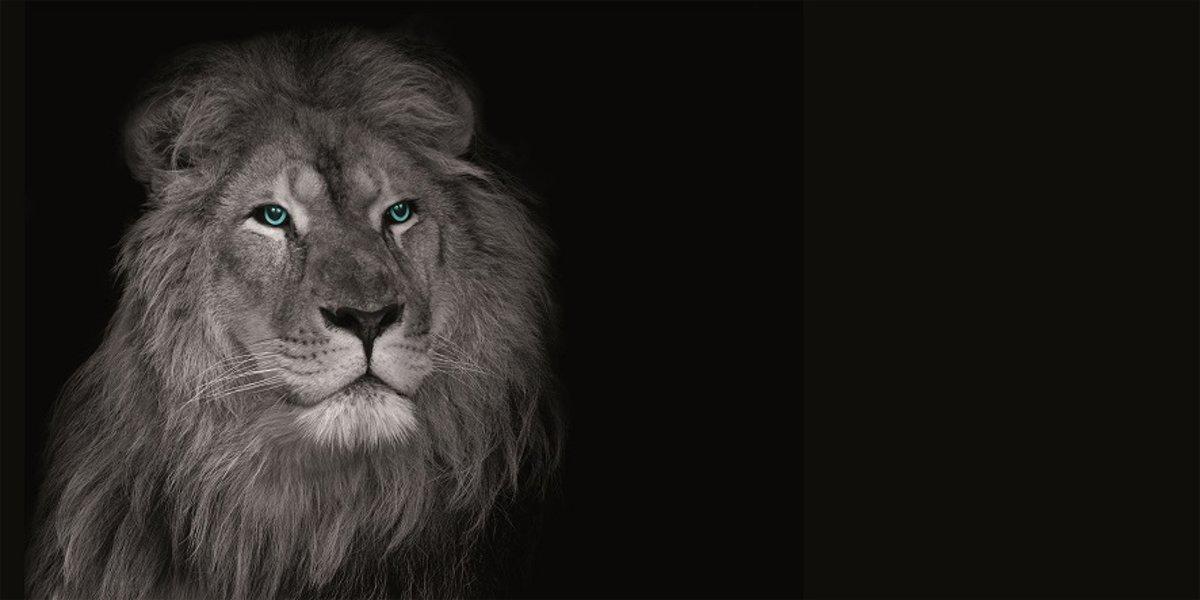Canvas Leeuw 50x100cm kopen