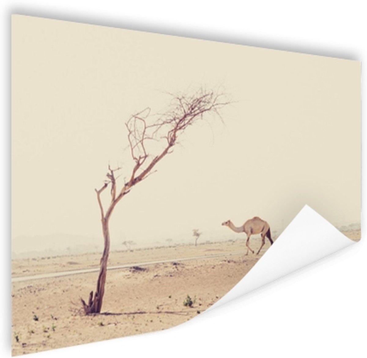 Kameel wandelt over woestijnweg in Dubai Poster 180x120 cm - Foto print op Poster (wanddecoratie) / Dieren Poster XXL / Groot formaat! kopen