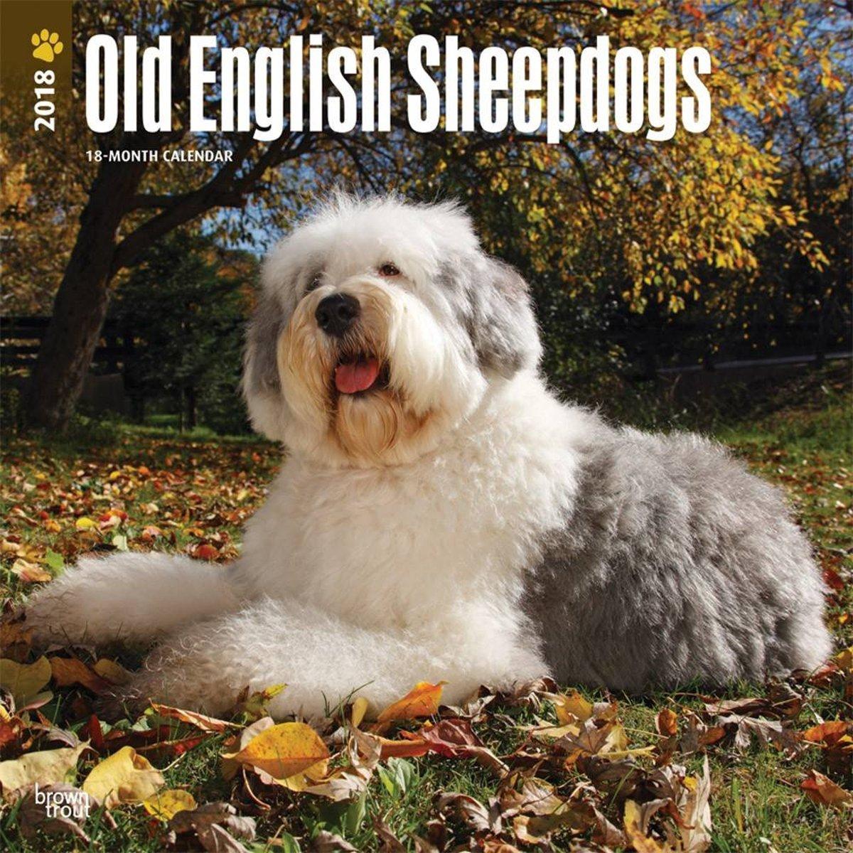 Old English Sheepdog Calendar 2019