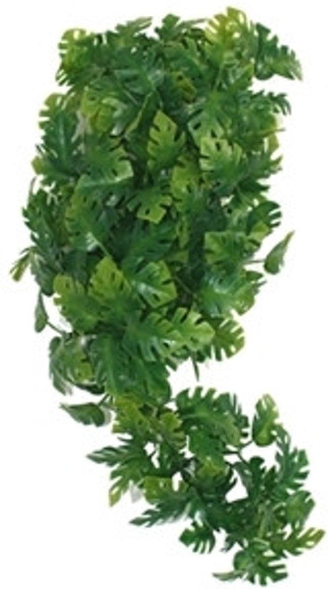 Komodo Plant Split Philodendron - 40 cm kopen