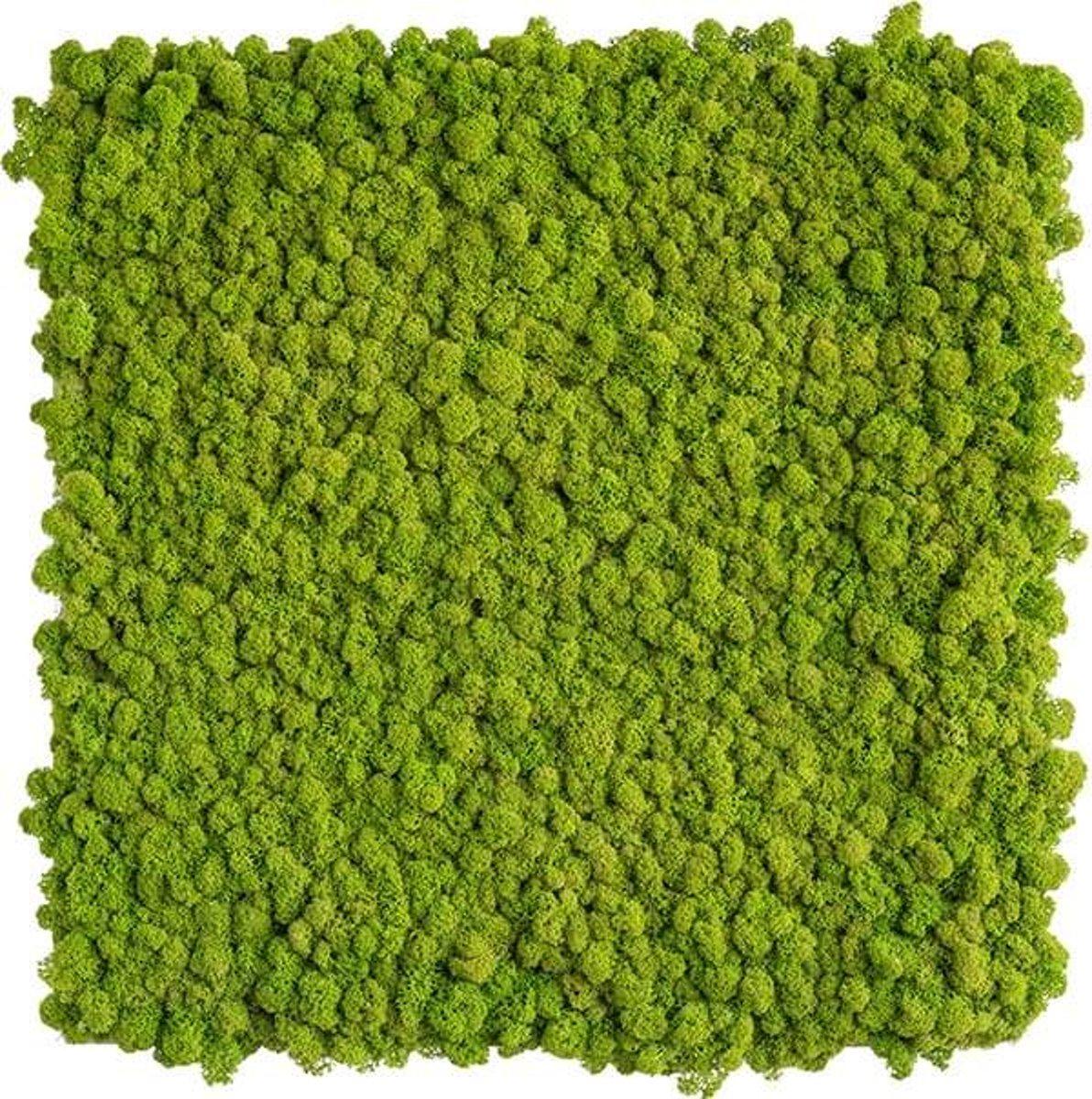 reindeer moss picture 55 x 55 CM voorjaar