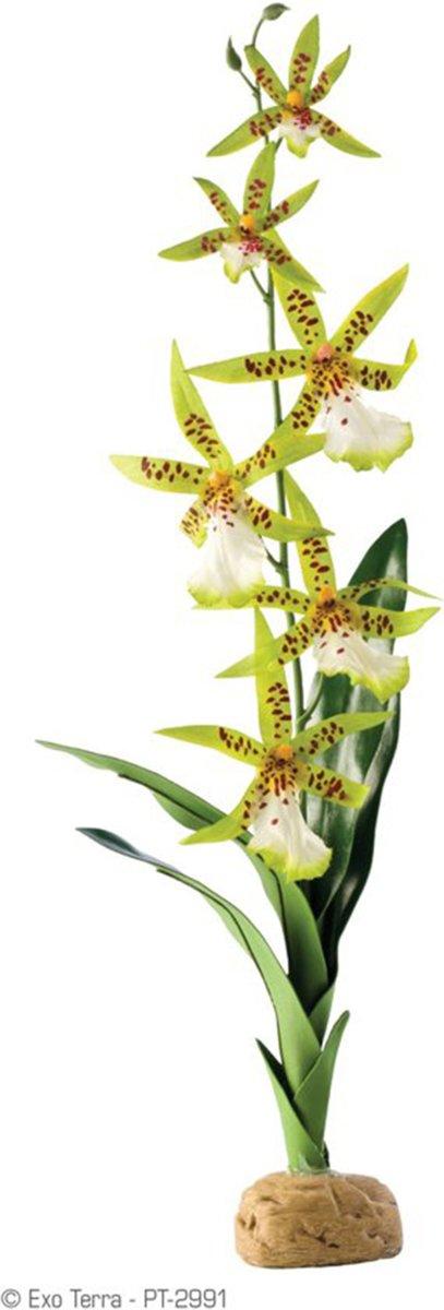 Exo Terra - Rainforest Plant  - Spider Orchid - Kunstplant voor Terraria