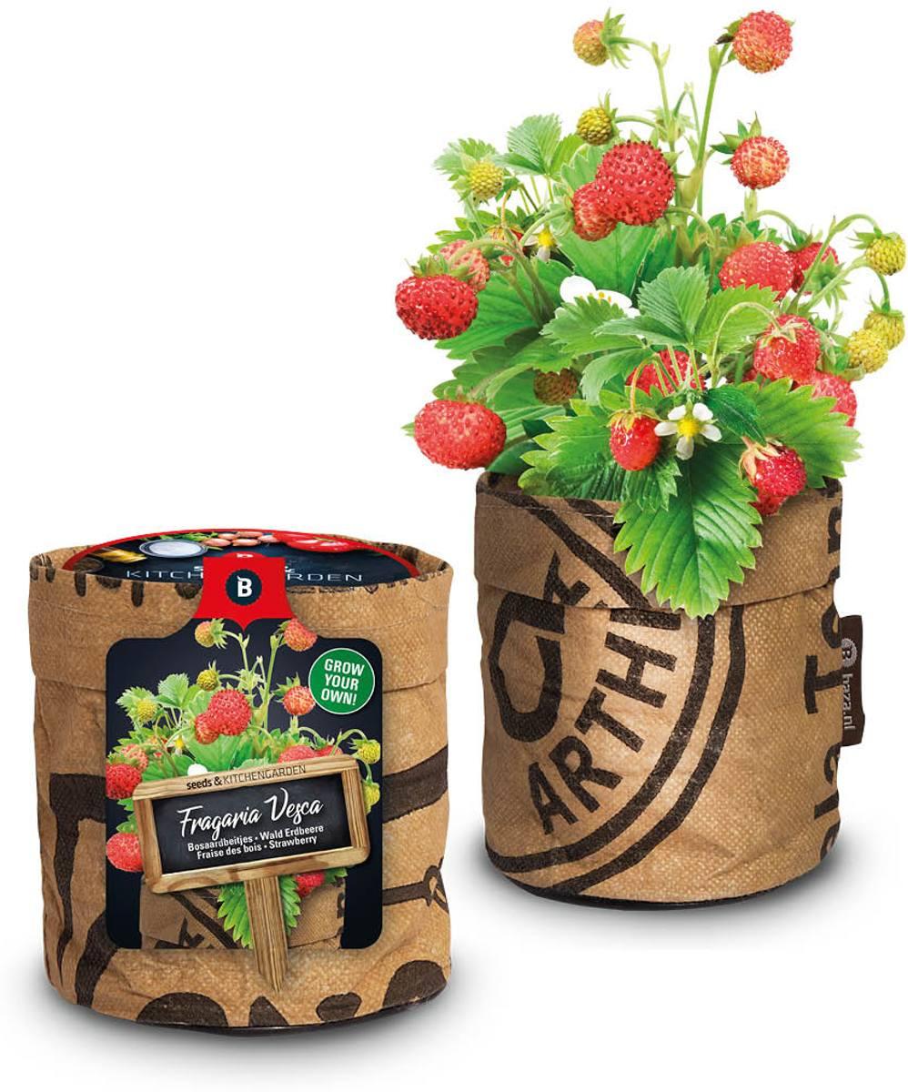 Keukentuintje aardbeien kweken