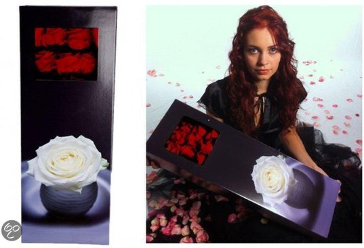 10 rode rozen grootbloemig in cadeau box kopen
