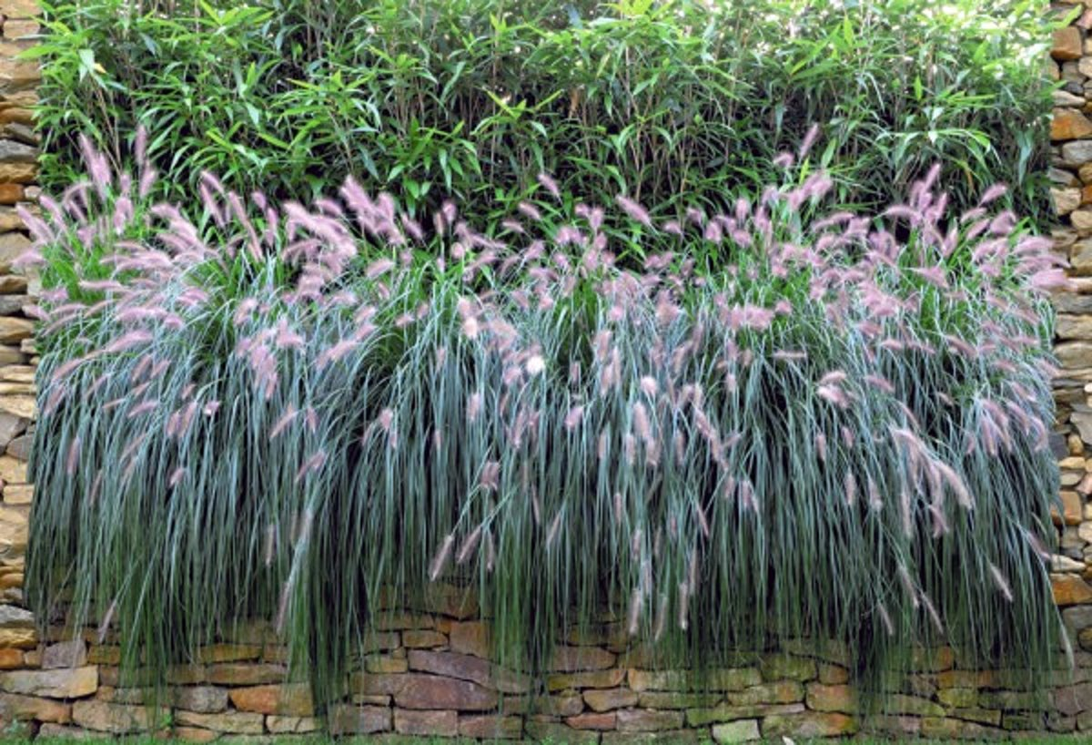 Gipea Easy Fix (Panorama Flower wall ) 1 kopen