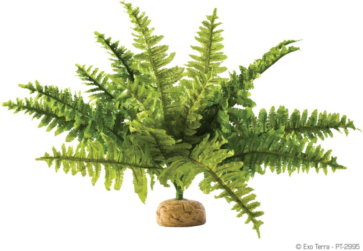 Exo Terra - Terrarium decoratie Rainforest Plant - Boston Fern/Varen - M - 9x5x29cm