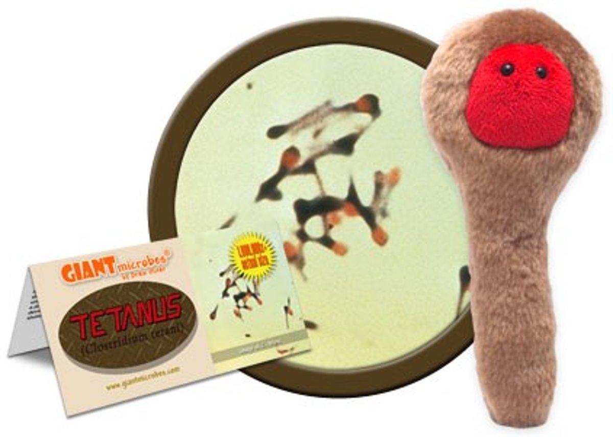 Tetanus (Clostridium tetani)