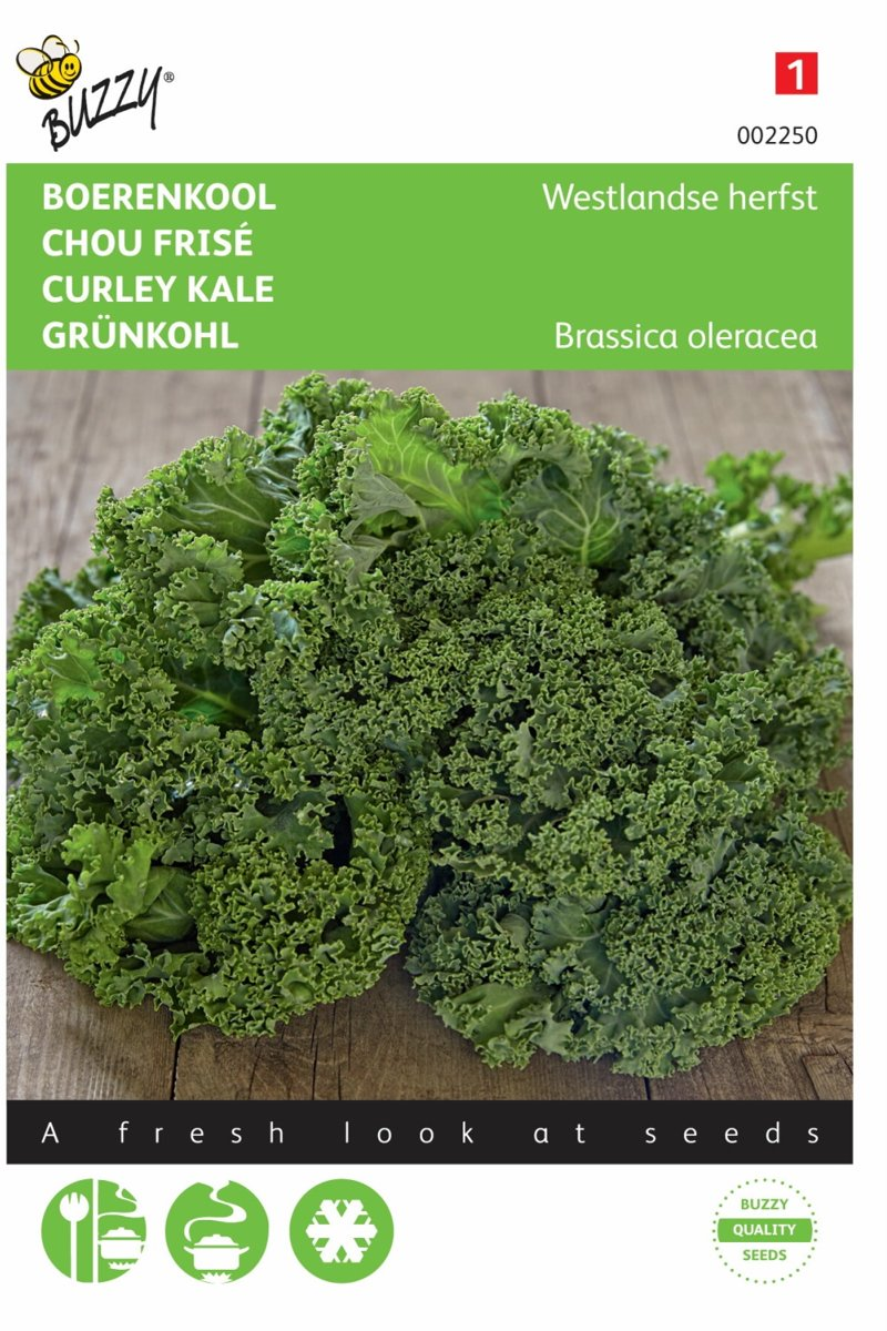 Boerenkool Westlandse Herfst - Brassica oleracea - set van 8 stuks kopen
