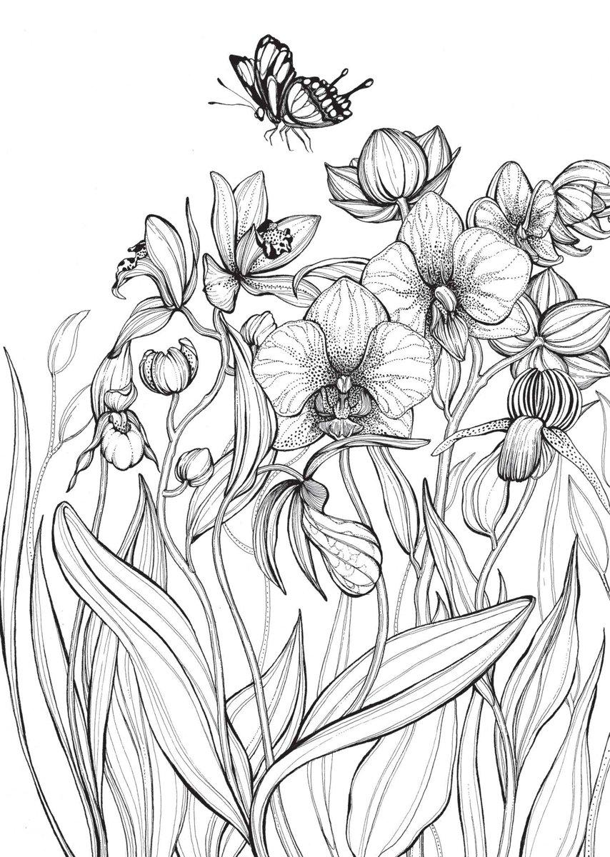 Kleurplaten Natuur Bloemen.Bol Com Kleurboek Voor Volwassenen Bloemen Daniela Jaglenka