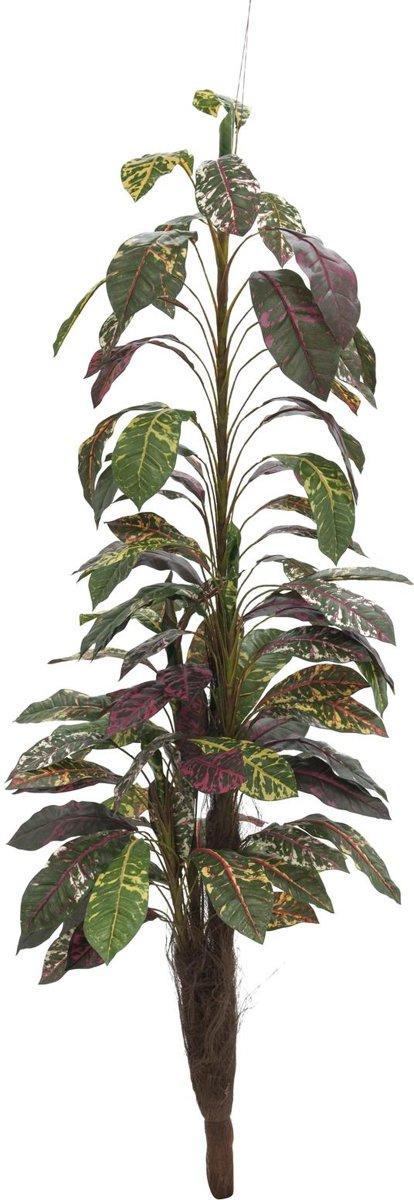 Europalms Croton met kokosnoot stam, 180cm kopen