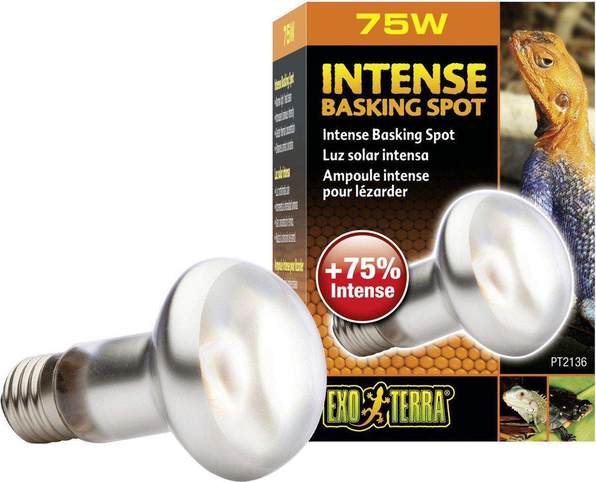 Exo Terra Basking Spot Lamp - 75W
