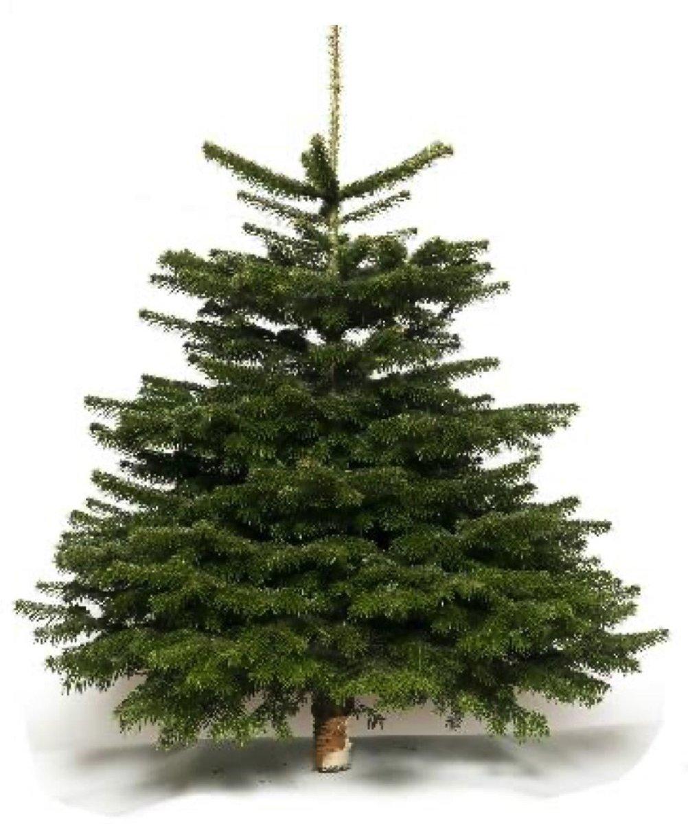 Echte kerstboom Nordmann 210-235 cm - gezaagd kopen