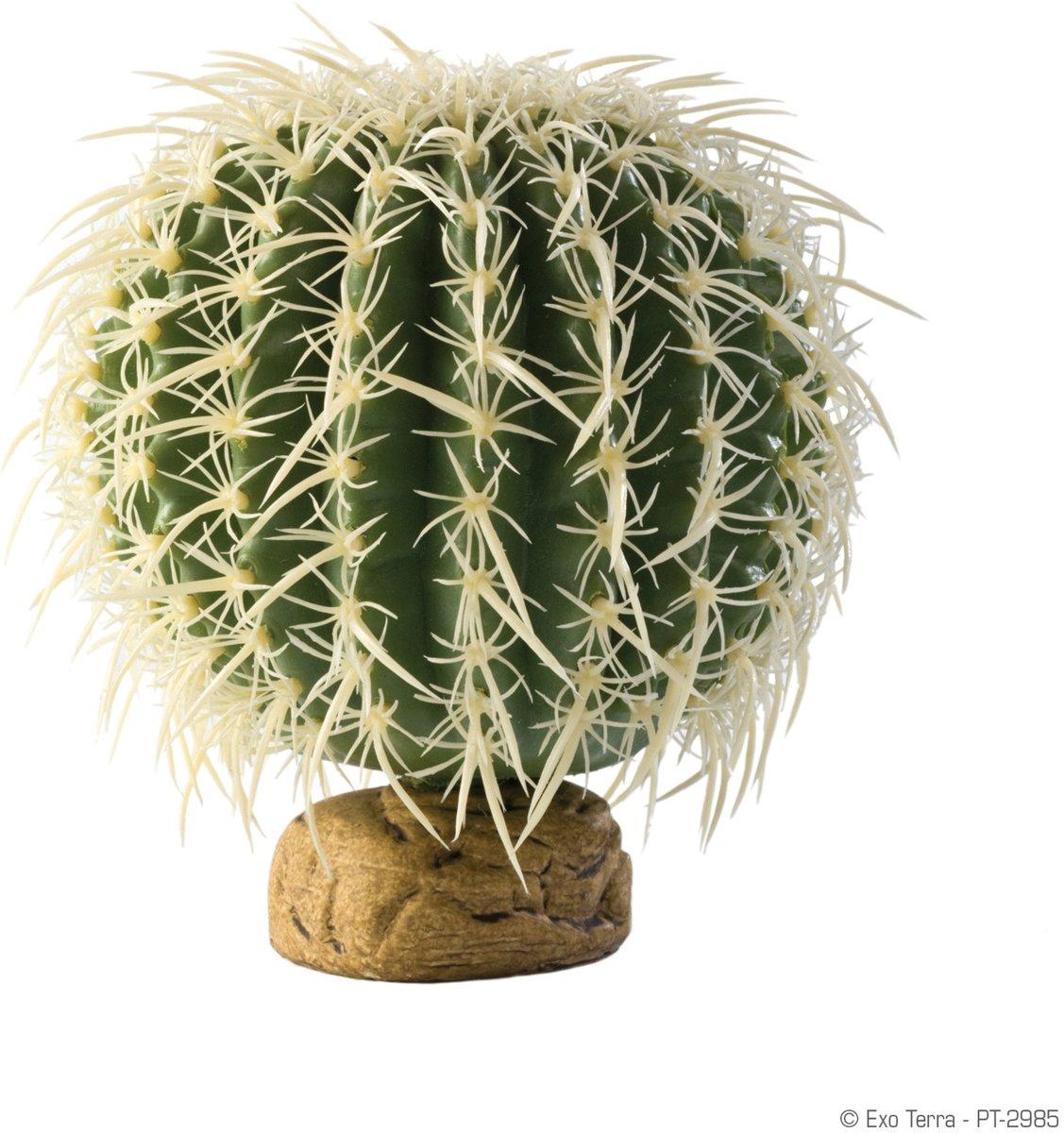 Cylinder Cactus Medium