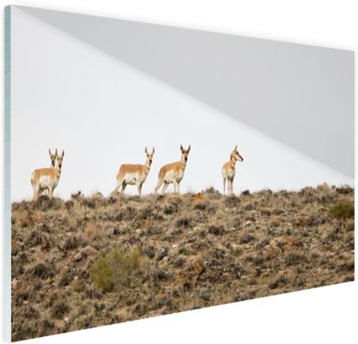c3096911dea https://www.bol.com/nl/p/vintage-olifant-aluminium-80x80-cm-foto-print ...