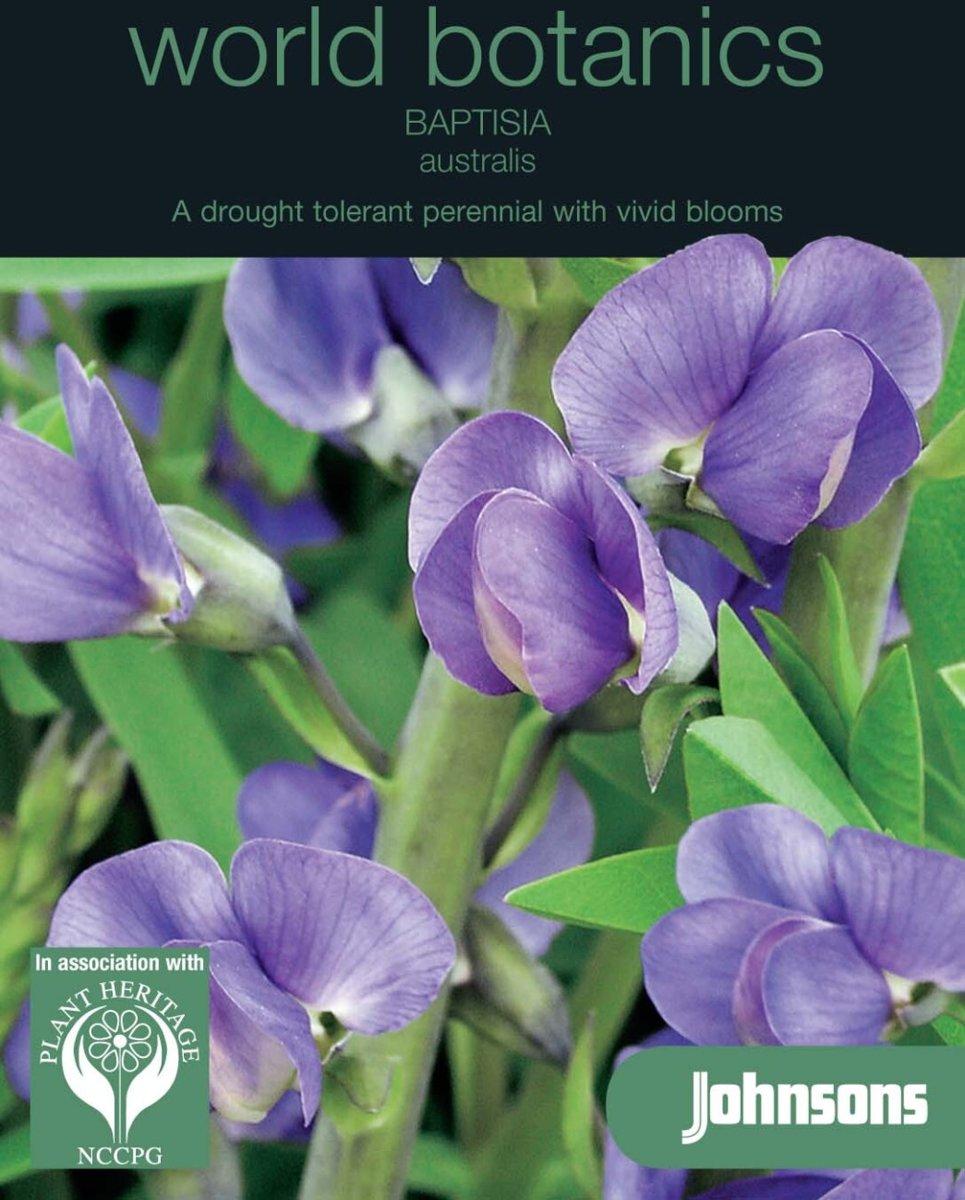 Baptisia australis - Valse indigo - set van 6 stuks kopen