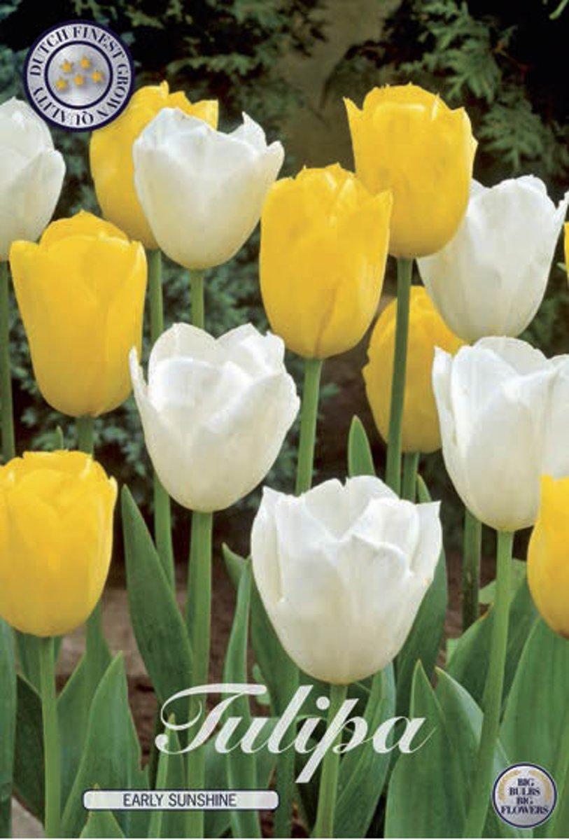 Early Sunshine Garden Tulpenbollen 10 stuks bolmaat 12+ kopen