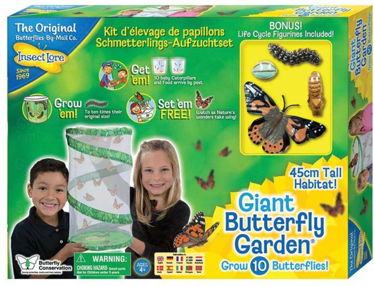 Reuze Vlinder kweekset kopen