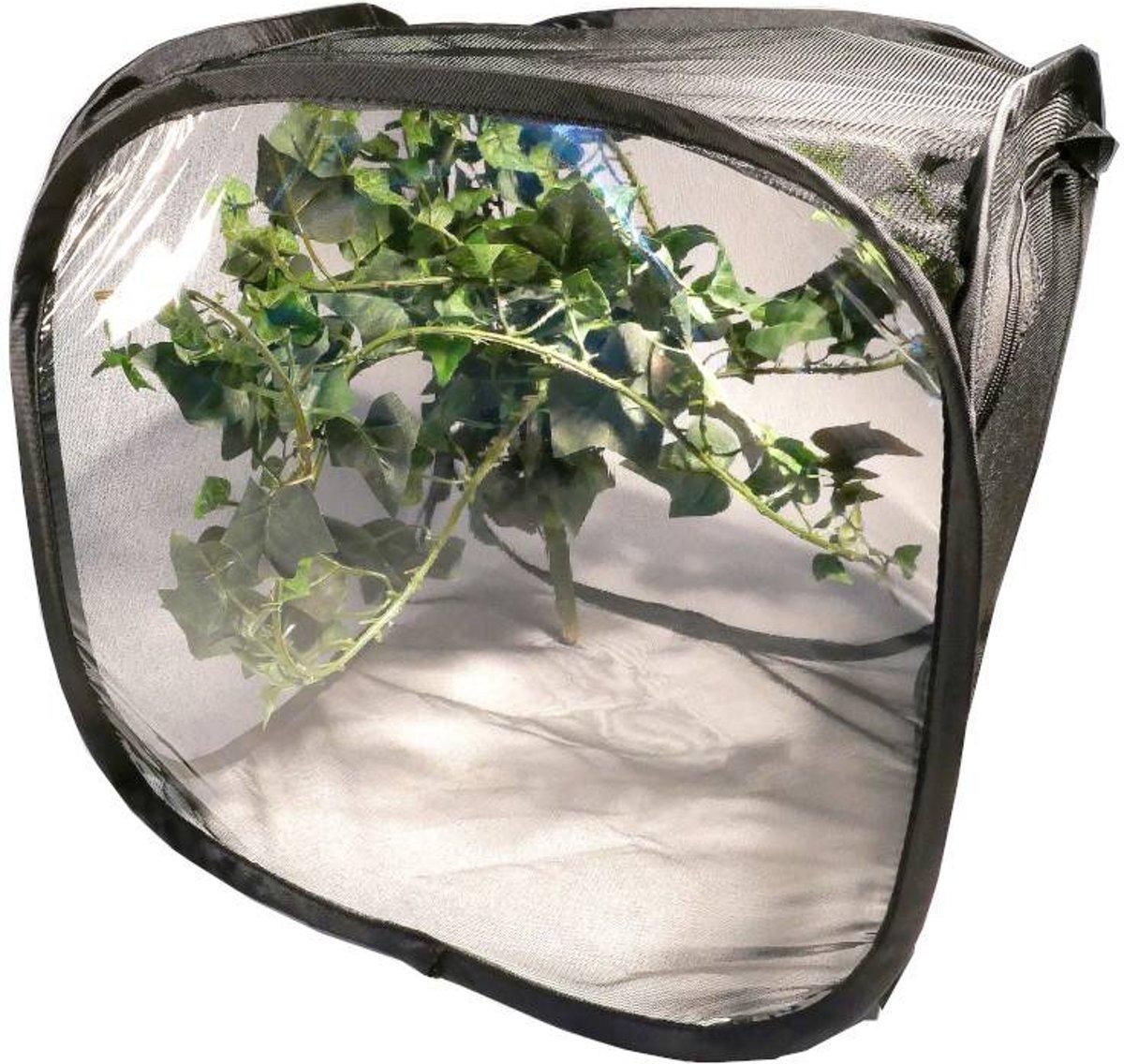 Insecten kweeknet, netcage M versie 2.0 kopen