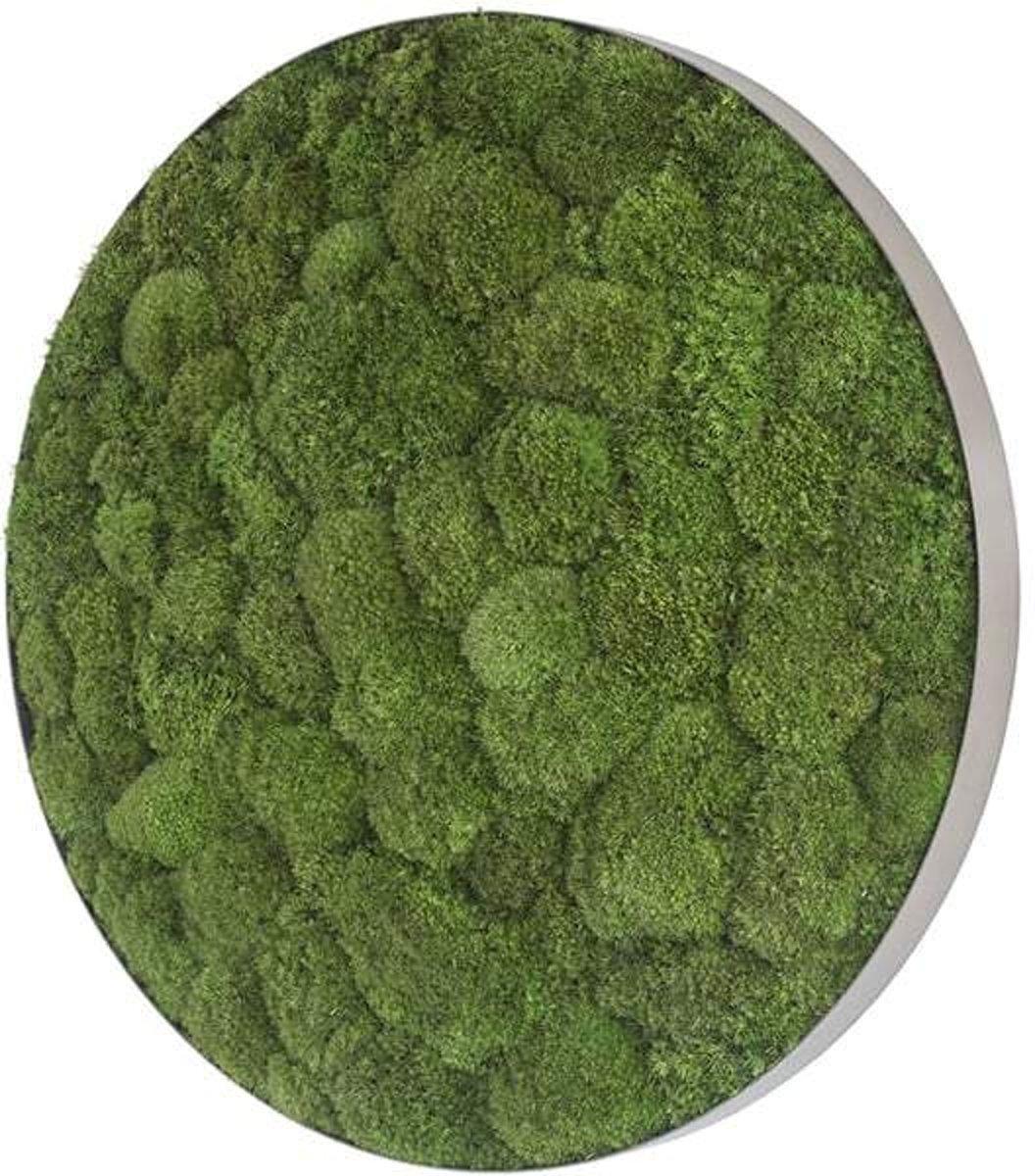 Ronde verticale tuin - Pole moss - Ellipsoid - Diameter 54cm
