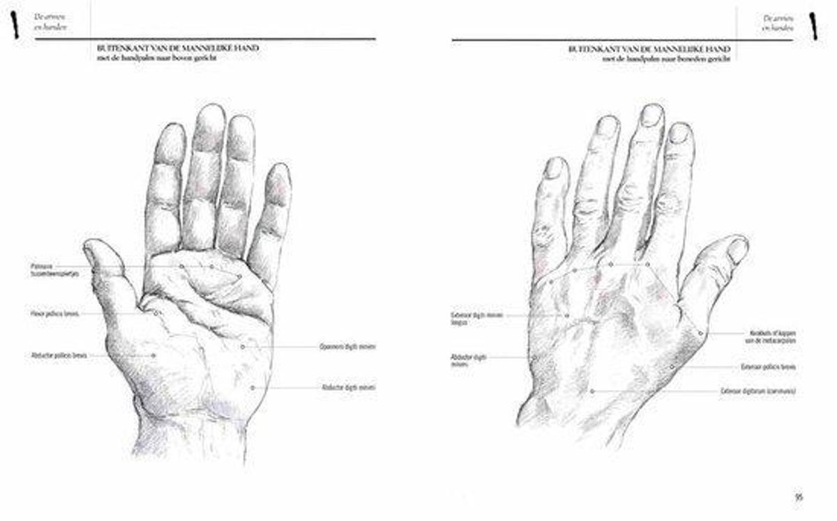 Ausgezeichnet 5. Finger Anatomie Zeitgenössisch - Anatomie von ...