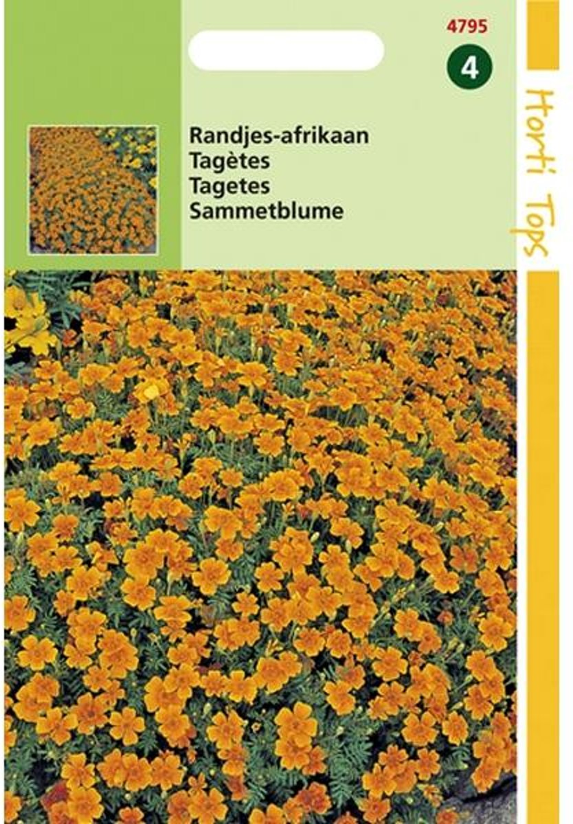 Randjes afrikaan - Tagetes tenuifolia - set van 6 stuks kopen