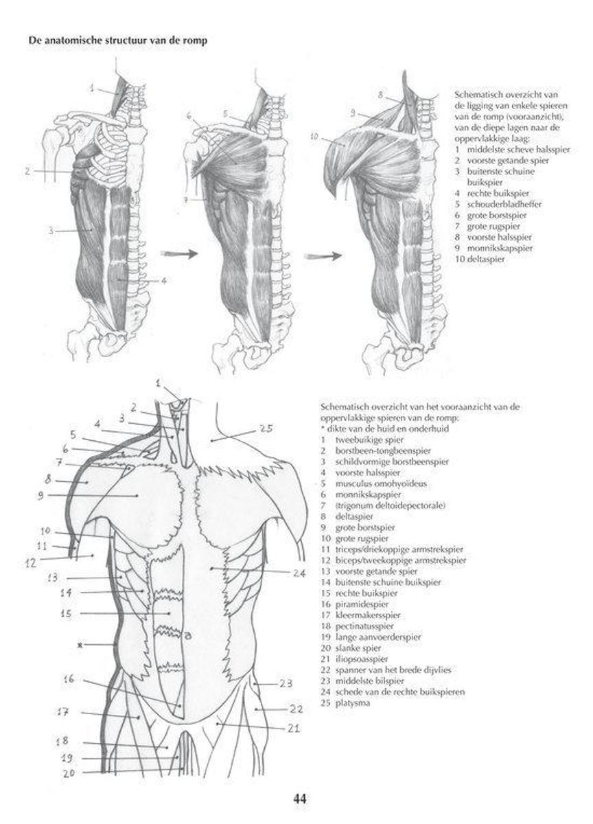 Nett Anatomie Des Rechten Unterbauch Fotos - Anatomie Ideen ...